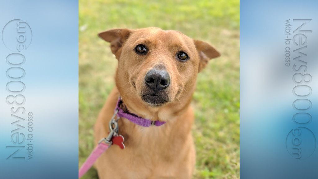 Pet of the Week – Todd