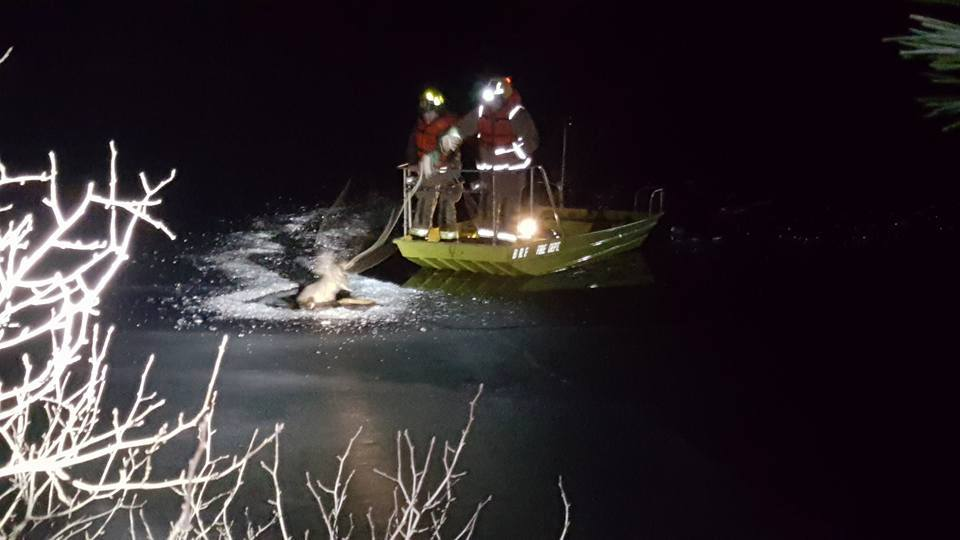 Black River Falls firefighters rescue deer trapped on ice