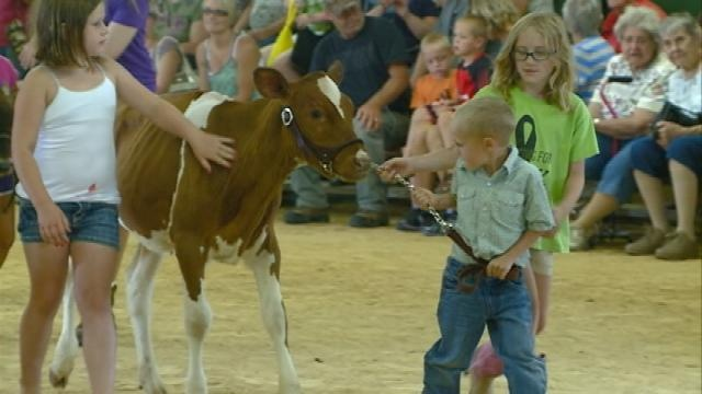 Young farmers take part in 'Little Squirts' Dairy Show