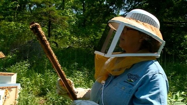 Local beekeeper hopes bee habitat grant will keep the industry buzzing