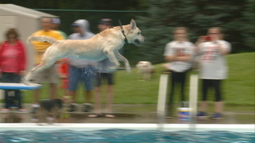 Hundreds of dogs make a splash at annual Diggity Dog Dip