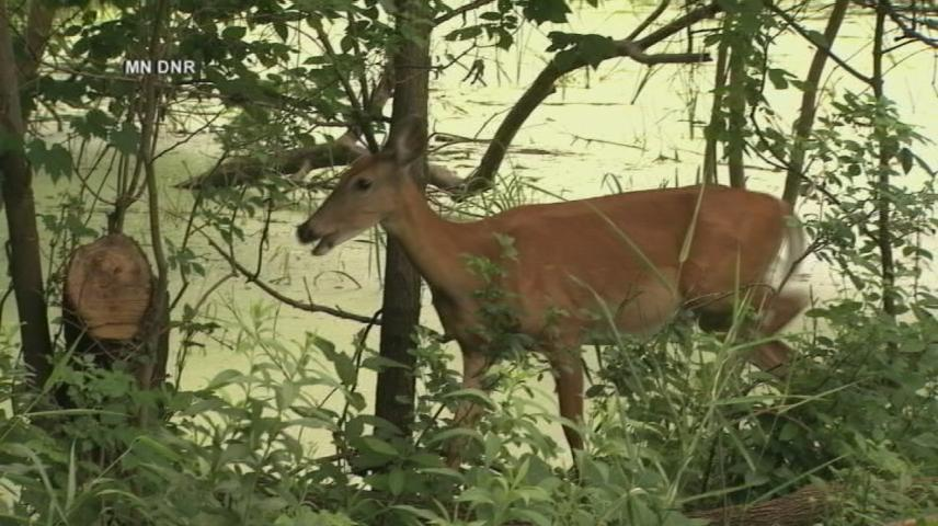 Special deer hunt to be hosted in Houston County