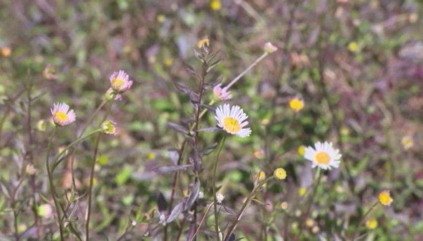 Allergy season expected to last longer due to climate change