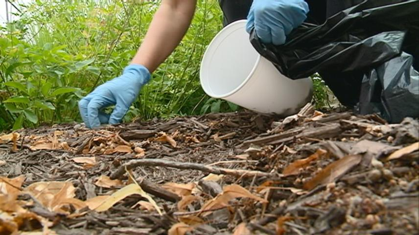 Western Technical College hosts campus clean-up