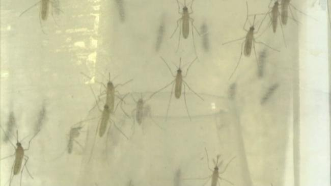 County health officials keep close eye on Zika virus