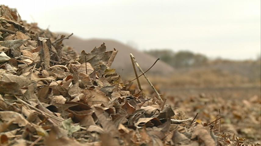 Leaf collection on hold in La Crosse due to snow in forecast