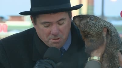 Sun Prairie looks for new groundhog after biting incident