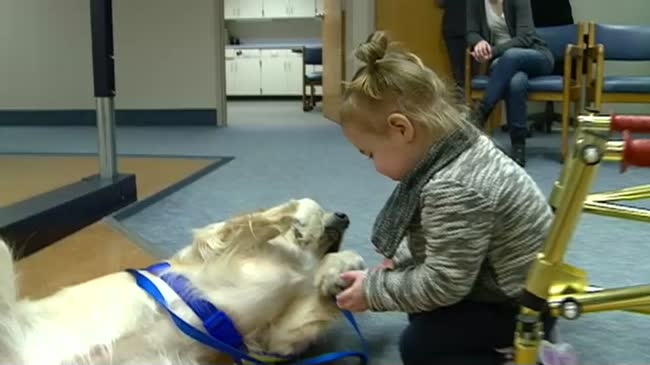 Dog helps toddler overcome hardships through therapy