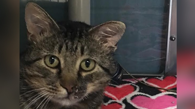 Pet of the Week – Wallace