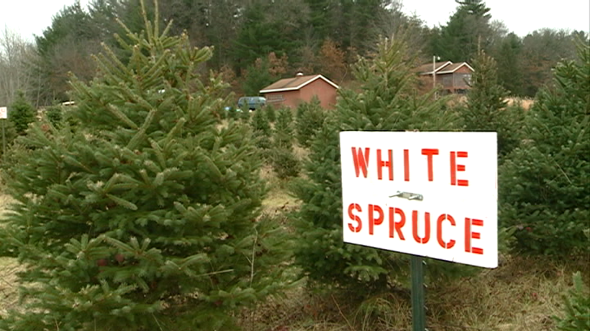Area Christmas tree farms stay busy
