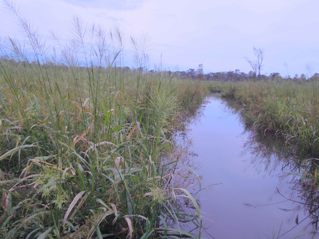 MPCA urges judge to drop objection to wild rice rule change