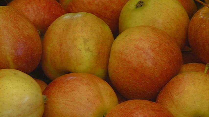 Local farmers retain strong sales thanks to winter market