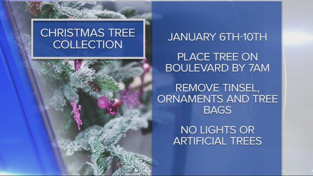 Christmas tree collection starts Monday in La Crosse