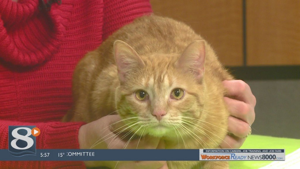 Pet of the week – Lola