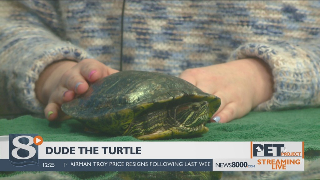 Pet Project – Dude the Turtle