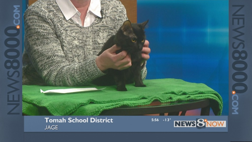 Pet of the week – Zephyr