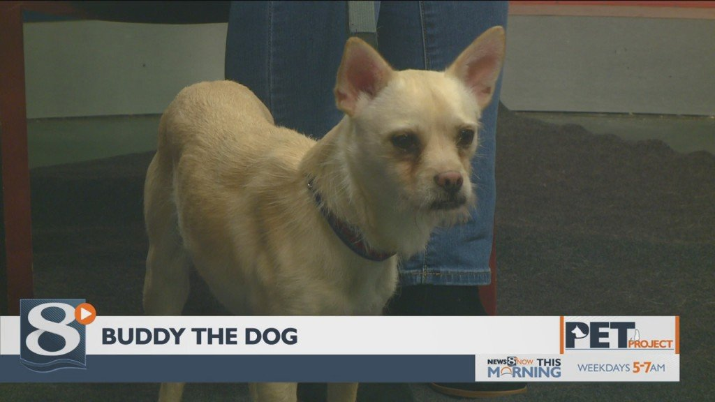 Pet Project – Buddy the Dog