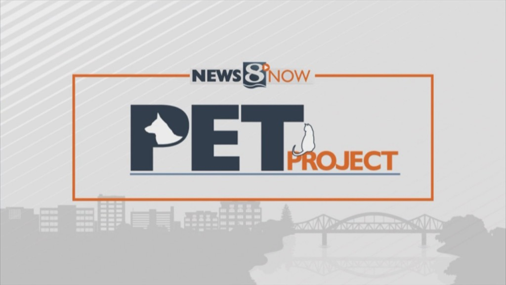 Pet Project Animal Control Officers Needed