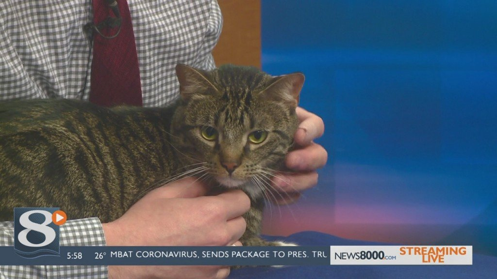 Pet Of The Week Osmond