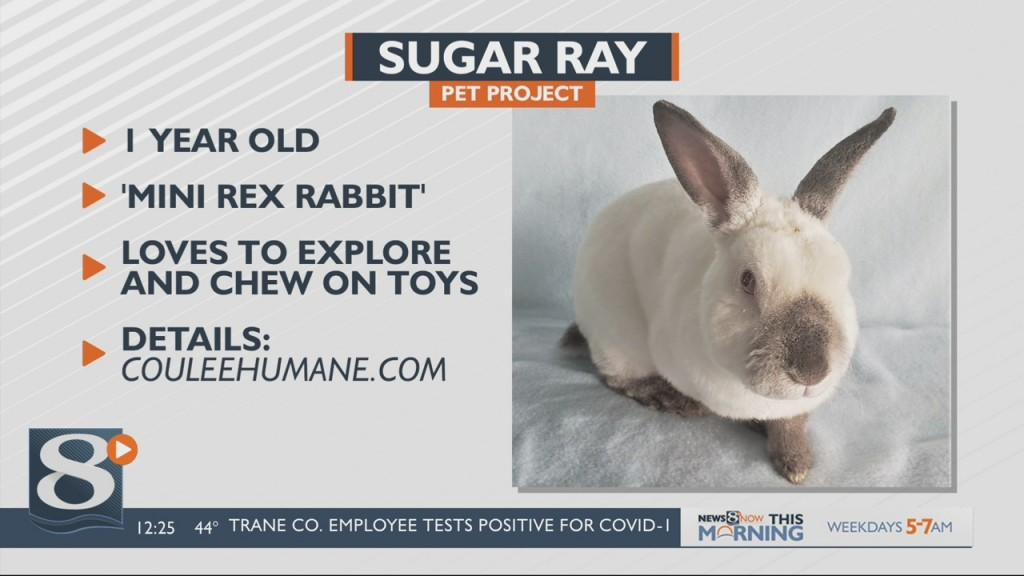 Pet Project Sugar Ray The Rabbit
