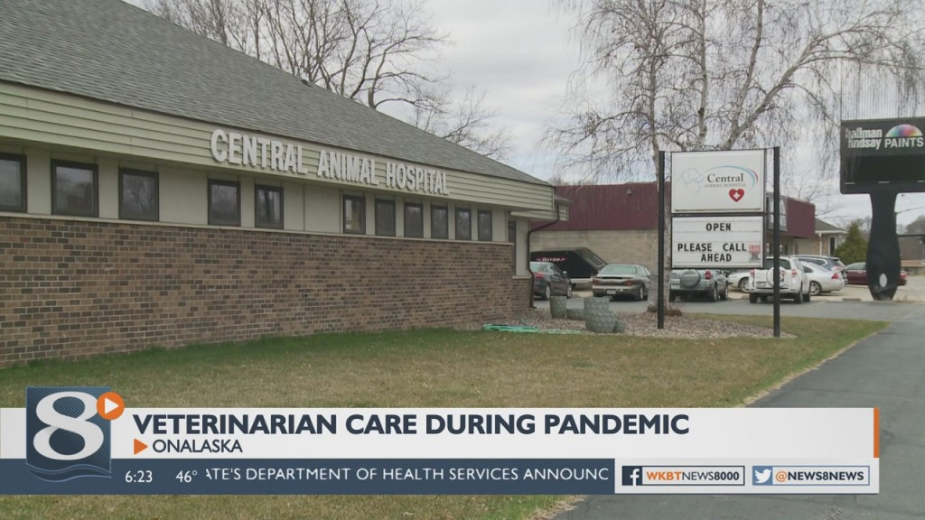 Local Veterinarians Will Still See Your Pet During The Pandemic