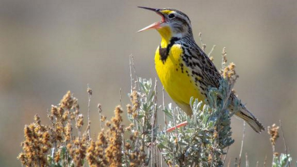 Birds are dying off at an alarming rate. Here's how you can help