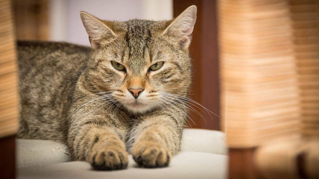 Cat put in 'solitary confinement' for freeing other cats from shelter