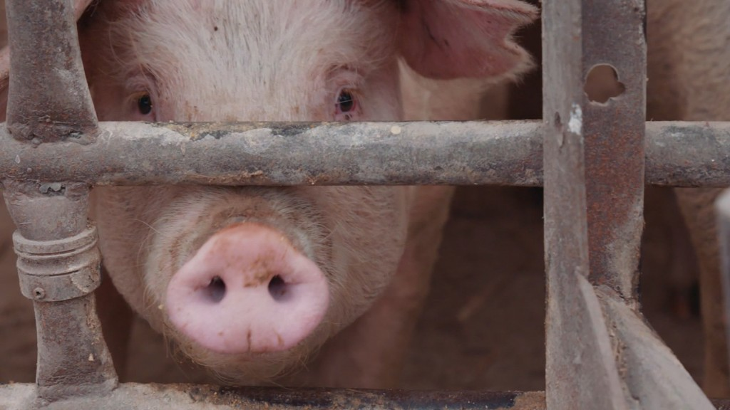 Reviving cells in a pig's brain could change medicine