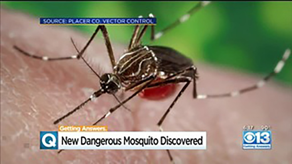 Potentially deadly mosquitoes found in New Jersey