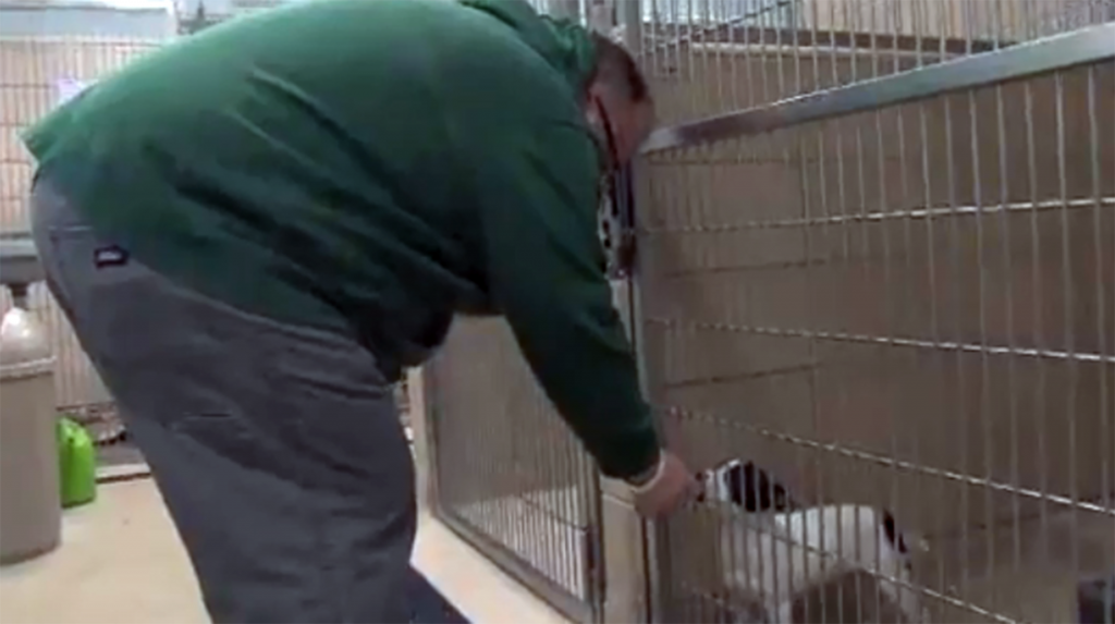 Michigan now officially a no-kill shelter state