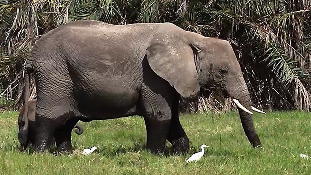 Report shows extent of endangered animal trade between Africa and Asia