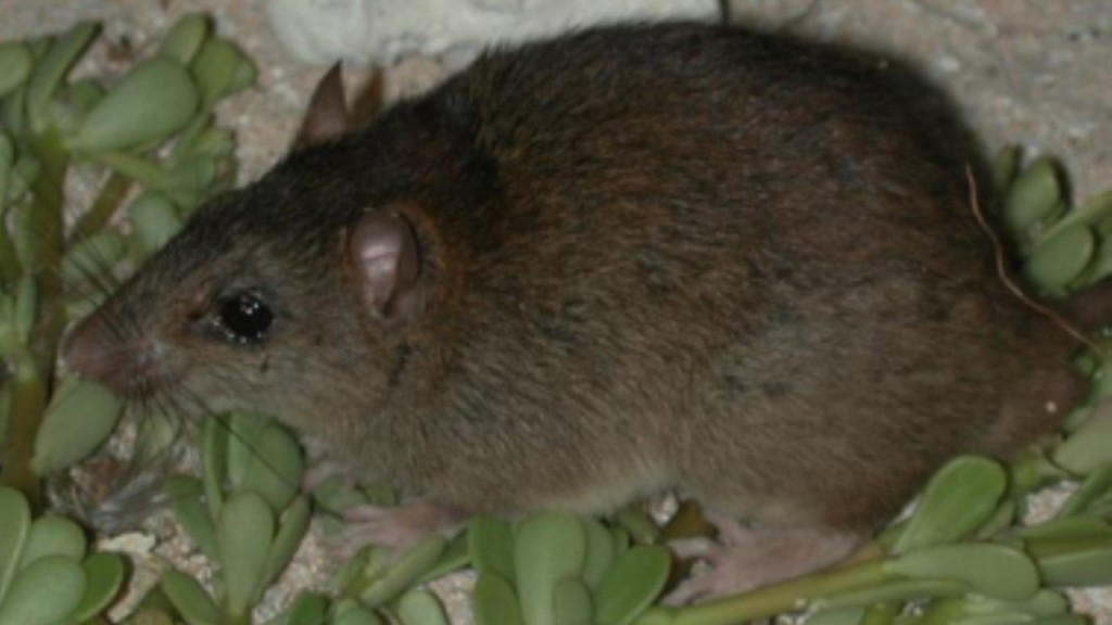 Australian mammal becomes first to go extinct due to climate change