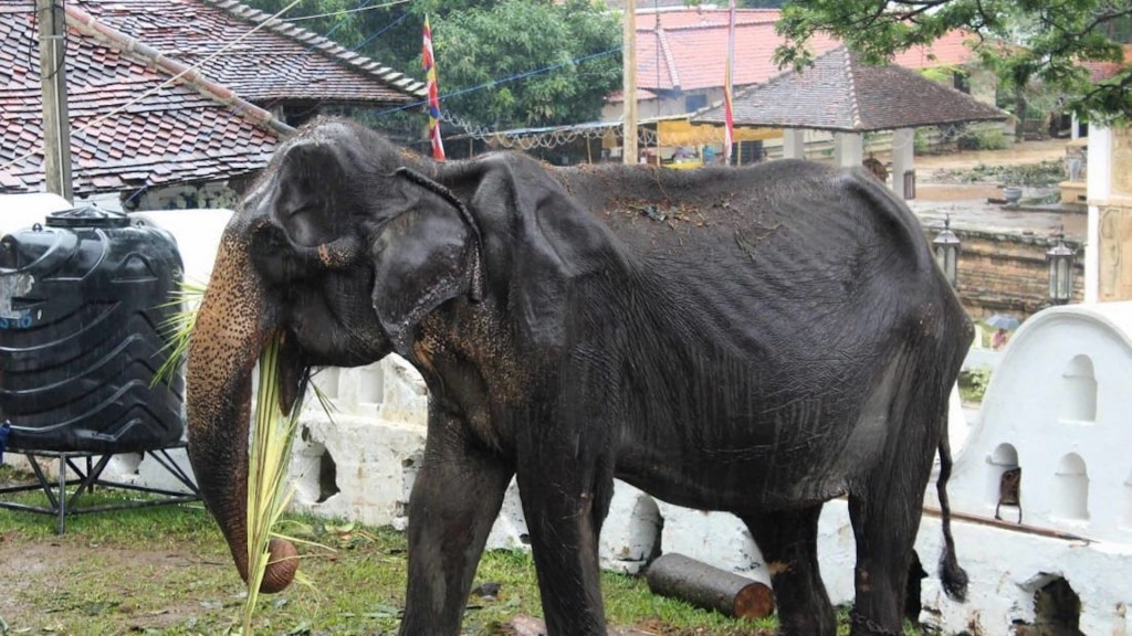 Elephant whose emaciated appearance sparked international outrage has died