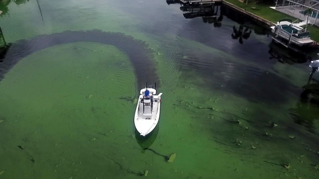 Toxic algae becomes major campaign issue in Florida Senate race