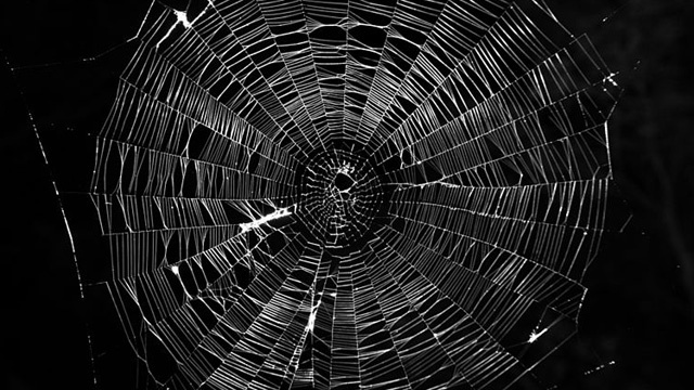 Town in Greece is draped in thousands of spider webs