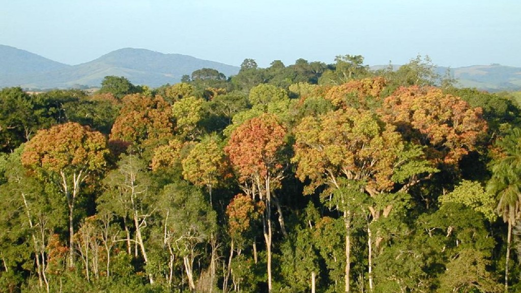 Gabon first African country to receive funding for preserving its rainforests