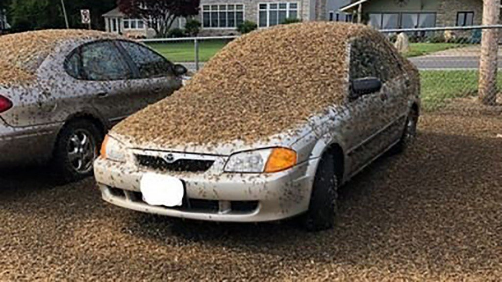 No, that's not dirt, it's a swarm of mayflies that's invaded Ohio