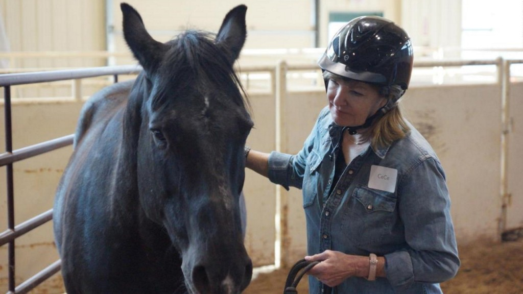 What executives can learn from a horse