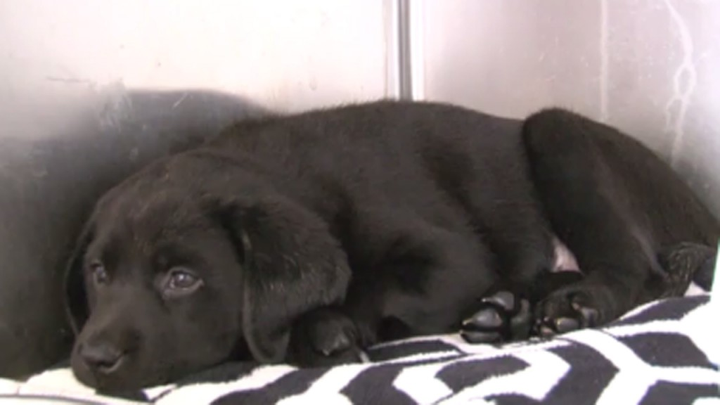 More than 100 puppies survive crash
