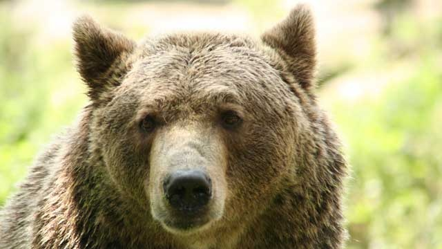 Bear breaks into Colorado home, evades police