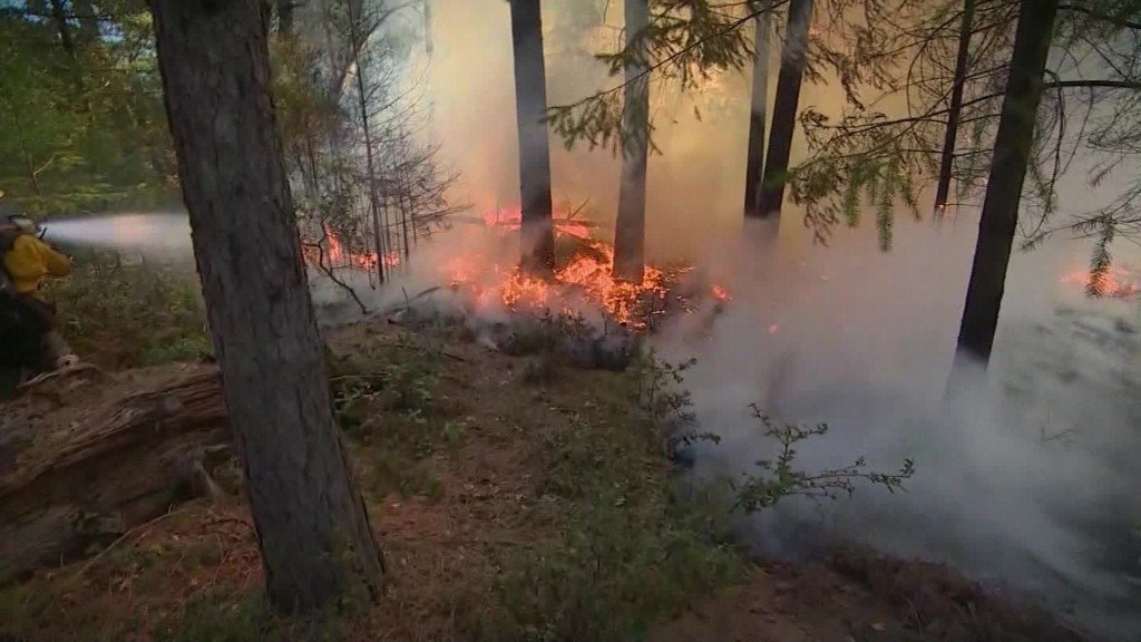 Forest Service plan would make it easier to log national forests