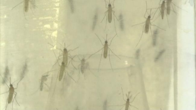 Doctors tie Zika virus to heart problems in some adults