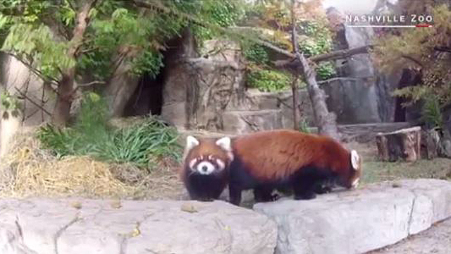 Zoos have fun competing in cute animal tweet-off
