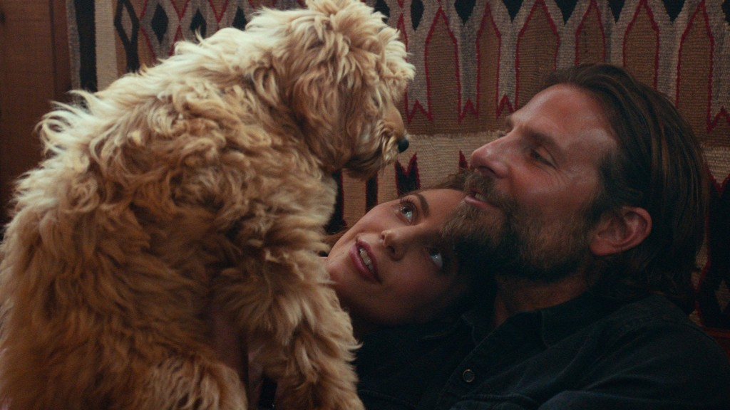 You're not only one thinking about dog from 'A Star Is Born'