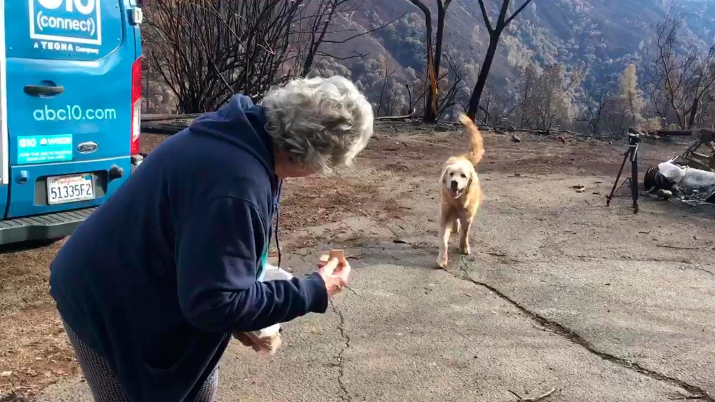 Woman reunited with dogs weeks after Calif. fires