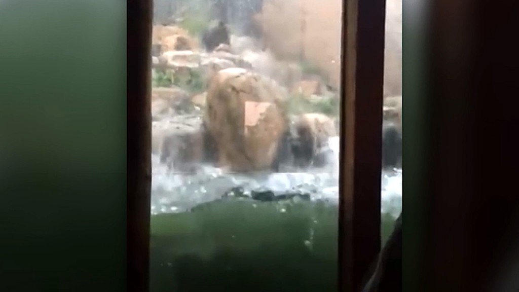 Hailstorm kills two animals at Colorado zoo; 14 people injured