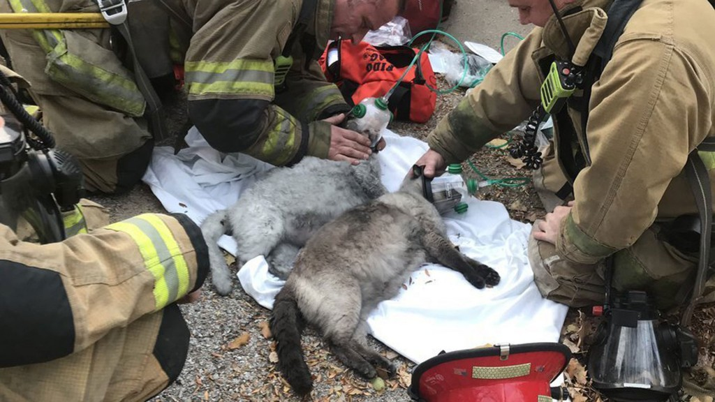 Firefighters resuscitate cats after house fire