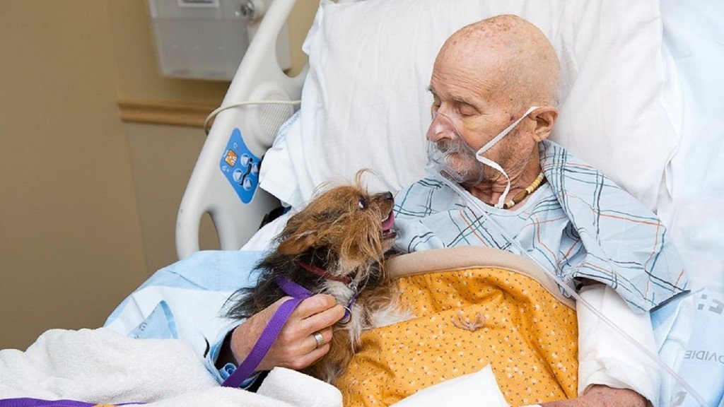 Dying veteran reunites with beloved dog for final time