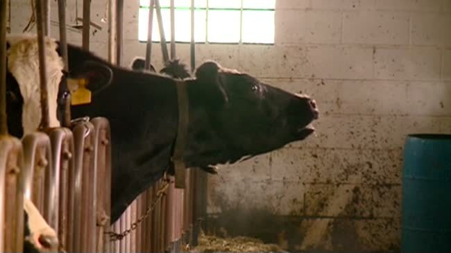 Wisconsin sees decline in number of dairy farms
