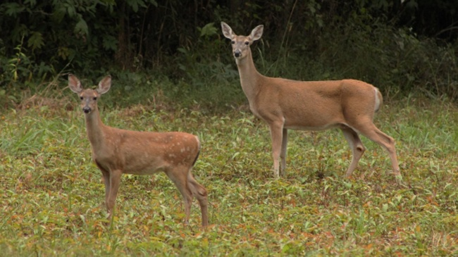 Motorcyclists hits deer, then is hit by truck, car